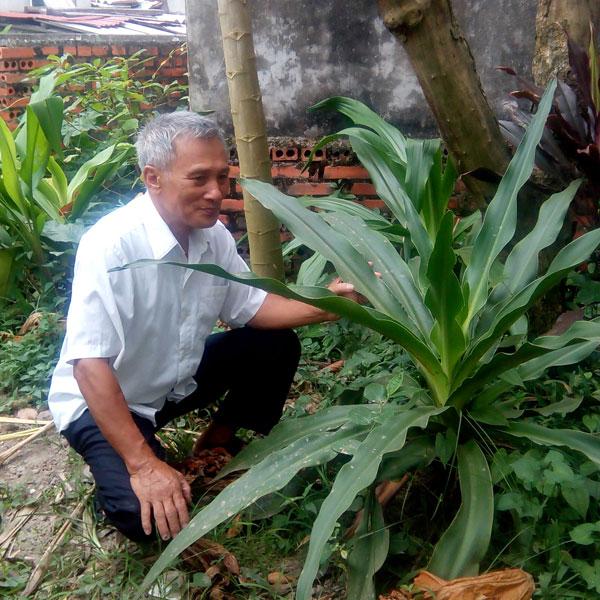 Ông Đỗ Hữu Khắc chăm sóc cây Náng hoa trắng trong vườn nhà