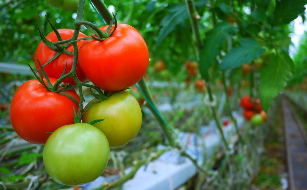 Rau bắp cải, thực phẩm tốt cho tuyến tiền liệt